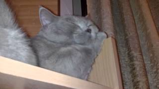 Ленивый кот. Тимофей - любитель здорового сна