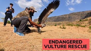 Endangered Vulture Rescue | Watch till the end | Eco Echo | Animal Rescue India