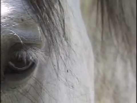 When The Horses Start Singing (Patti Witten)