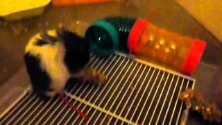 Funny hamster Thumbnail