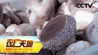 《农广天地》 20190516 精准注水 香菇高产| CCTV农业
