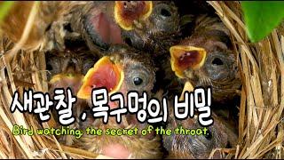 [와일드코리아,wildkorea] 새관찰, 4번째 이야…