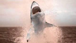Ignition Technician - Shark Attack (Glenn Wilson Remix)