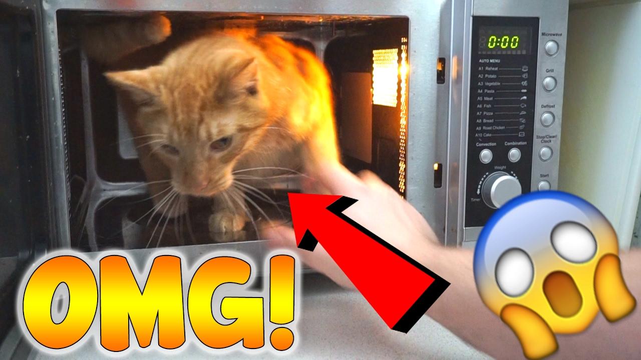 Katze In Mikrowelle