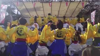 秋田市 千秋公園桜祭りで行われた ヤートセin千秋公園 2日目、 2回目...