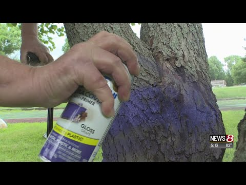 Brooksie - If You See Purple Paint On Trees You Need To Turn Around Immediately