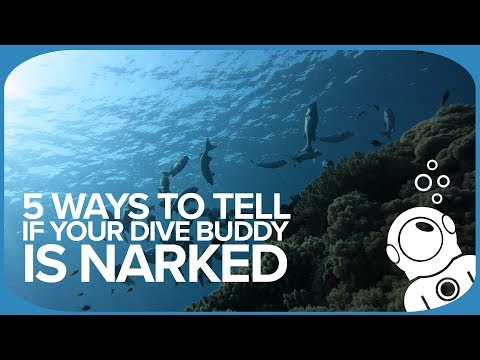 5 Ways To Tell If Your Dive Buddy Is Narked