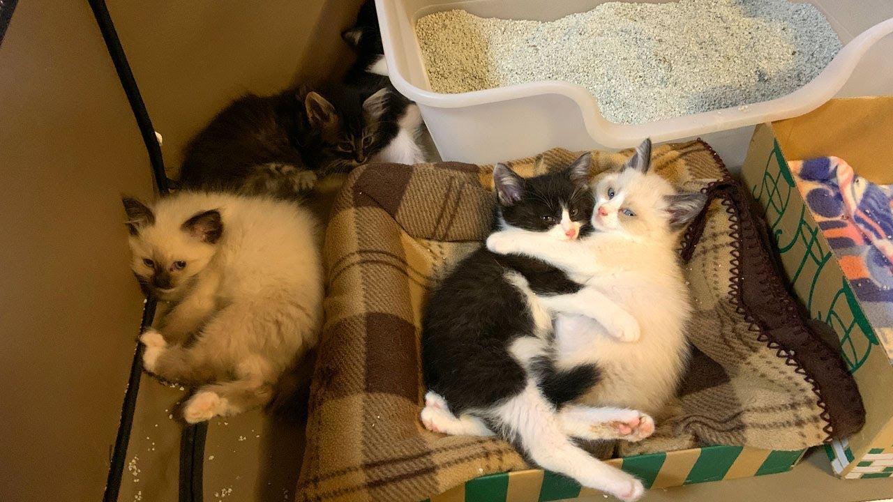 少しリラックスしてきた保護子猫たち