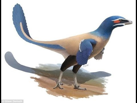 71 million year old bird like dinosaur the size of a HUMAN