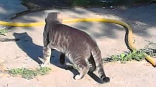 Бой кота и гадюки
