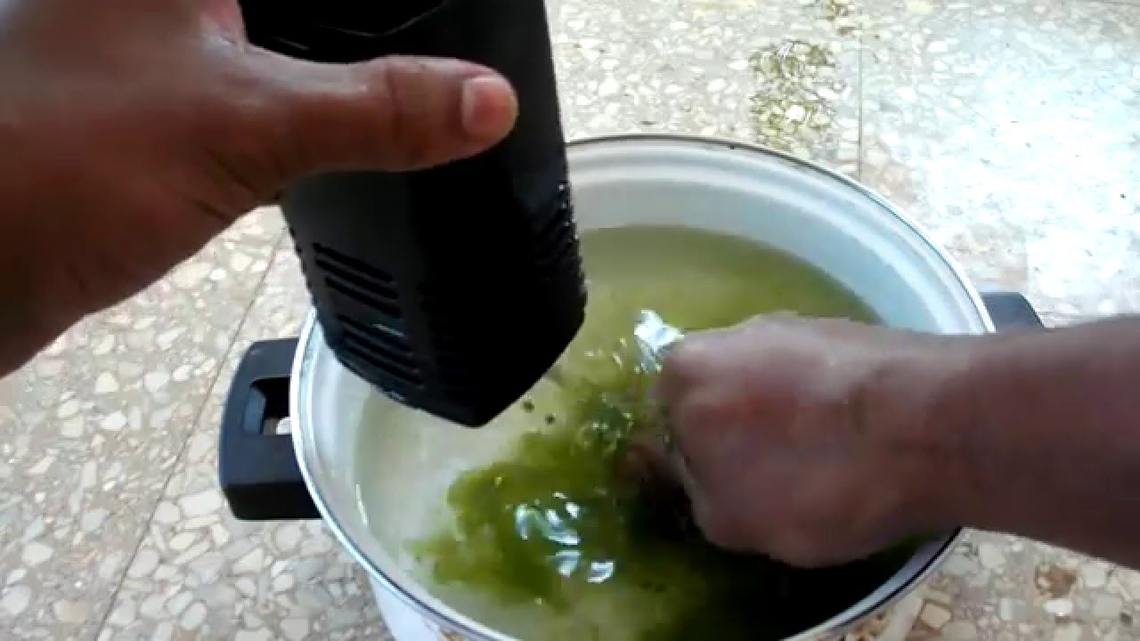 Get Rid Of Green Algae In Your Tank Youtube
