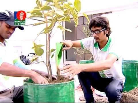 roof garden in bangladesh