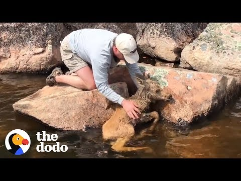 Baby Moose Gets Hoof Stuck Between Two Rocks and is Rescued by Fishermen   The Dodo