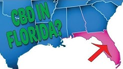 Where To Buy CBD Oil In Orlando Florida - What You Need To Know About CBD Laws In Florida