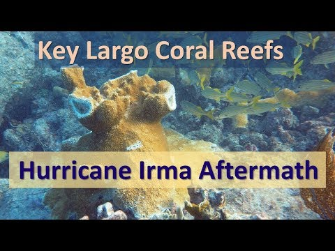 Key Largo Coral Reefs: Hurricane Irma Aftermath 2017