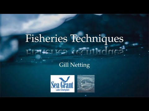 Fisheries Techniques - Gill Netting
