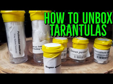 How To Unbox Spiders - DON'T KILL YOUR NEW TARANTULA!
