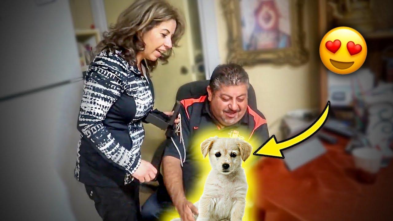 I GOT MY PARENTS A NEW DOG! *emotional
