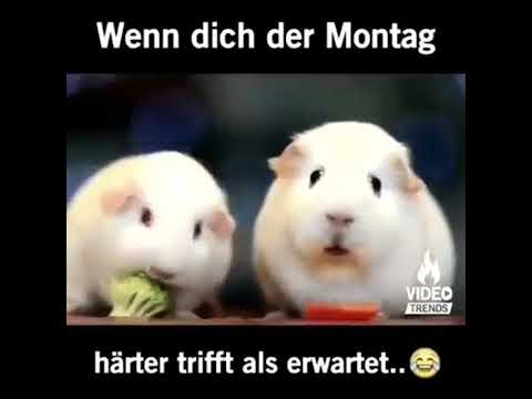 Lustige Videos für WhatsApp 😂 [Deutsch] - YouTube