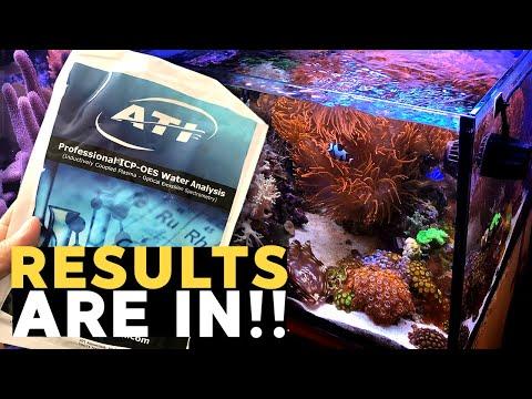 Copper In My Reef Tank?! 😱 (45g - 9/29/2019)