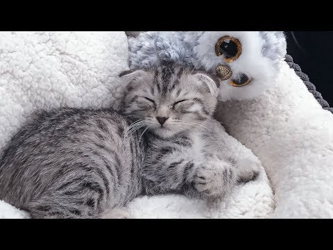 Introducing, Luna!