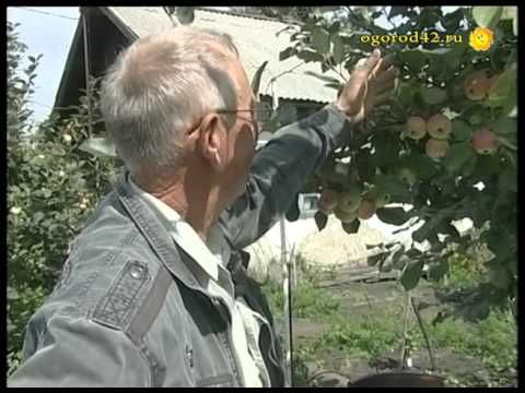 Ремонтантная малина (часть 1) - YouTube