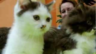 """Международная выставка кошек """"Весенняя капель"""". Смоленск"""
