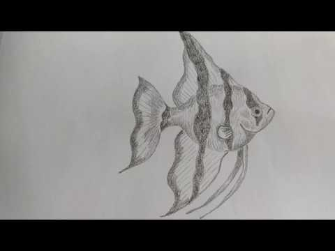 How To Draw An Angelfish Step By Step