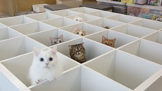 Moving Day.. Kitties Go Crazy! (ENG SUB)