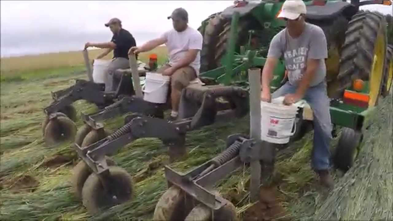 Videos: Planting no-till potatoes