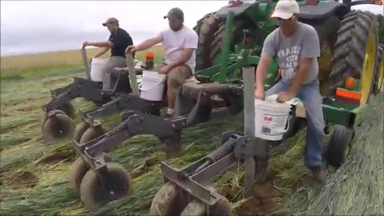 Videos: Planting no-till potatoes