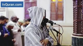 تلاوة من سورة فاطر - محمد عبادة