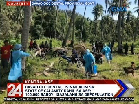 24 Oras: 100,000 baboy, papatayin sa Davao Occidental na nasa state of calamity na dahil sa ASF