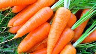 Как заморозить морковь на зиму Заготовка овощей на зиму
