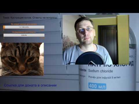 Кастрация кота. Когда кастрировать кота. Осложнения. Ответы на вопросы