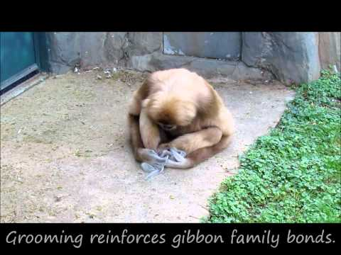 A Gibbon and His Squirrel