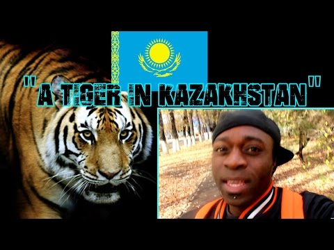 """Art In Almaty    """"A Tiger In Kazakhstan""""   Vlog   Part 2  """