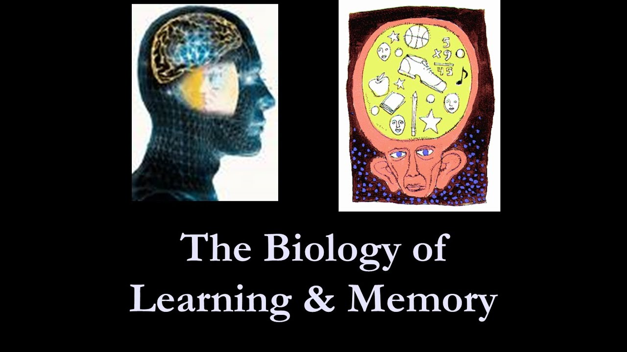 learning and memory - YouTube