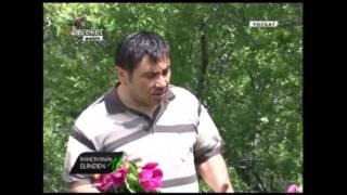 Çiçek Yetiştiriciliği - Şakayık Çiçeği (Kan Çiçeği, Yozgat Lalesi) 1. Bölüm