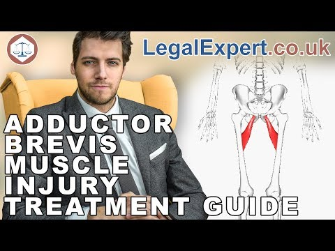 Adductor Brevis Muscle Injury Treatment Guide ( 2019 ) UK