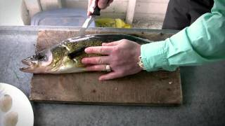 How to fillet Walleye - Walleye Cleaning