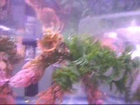 Betta breeding tank set up   YouTube