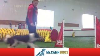 Dog Agility Training: Grand Slam - 11 Months Old
