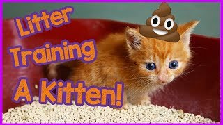 How To Litter Train A Kitten FAST - Kitten Care 101!