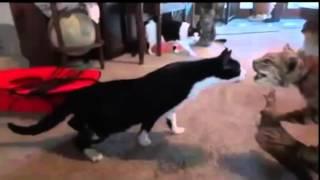 2015 Śmieszne Koty , Zwierzęta Funny Cats and Dogs 2015 BEST NEW