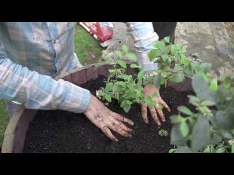How to grow fresh greens in containers