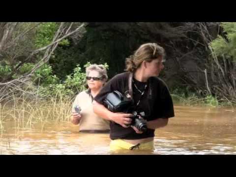 LBI Flood Jan 2011