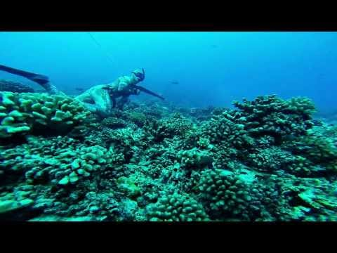 Freedive Spearfishing the Sharky Tuamotus