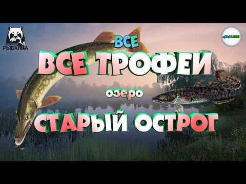 🔴РУССКАЯ РЫБАЛКА 4 (RUSSIAN FISHING 4)🔴 - ВСЕ ТРОФЕИ НА ОЗ. СТАРЫЙ ОСТРОГ. ПОЧЁТНЫЙ РЫБОЛОВ.
