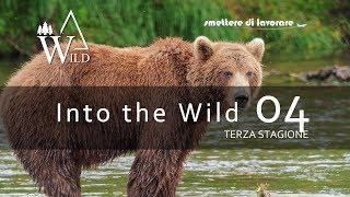 INTO THE WILD - Alla ricerca dell'ORSO! Laghi di Lamar - EP04 (terza stagione)